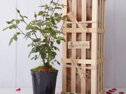 Ruby Rose Gift