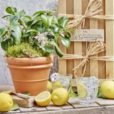The Lemon Gift Crate Jpg