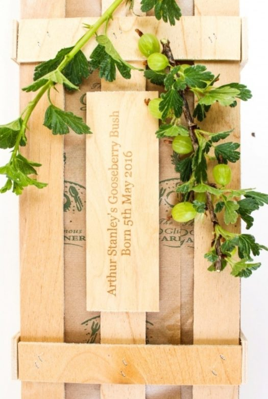Under Gooseberry Gift Plaque