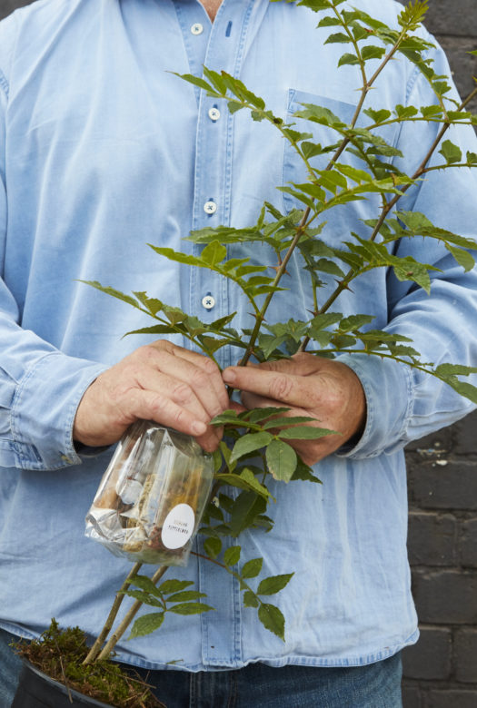 Five Spice Peppercorn Plant Gift