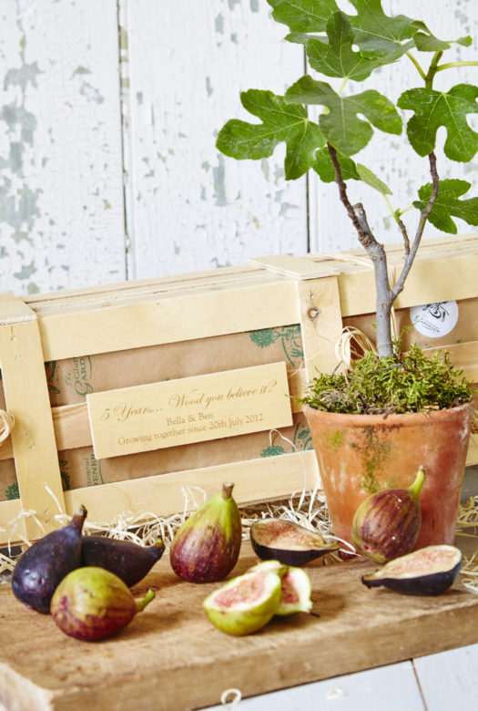 5Th Wedding Anniversary Personalised Fig Tree Gift