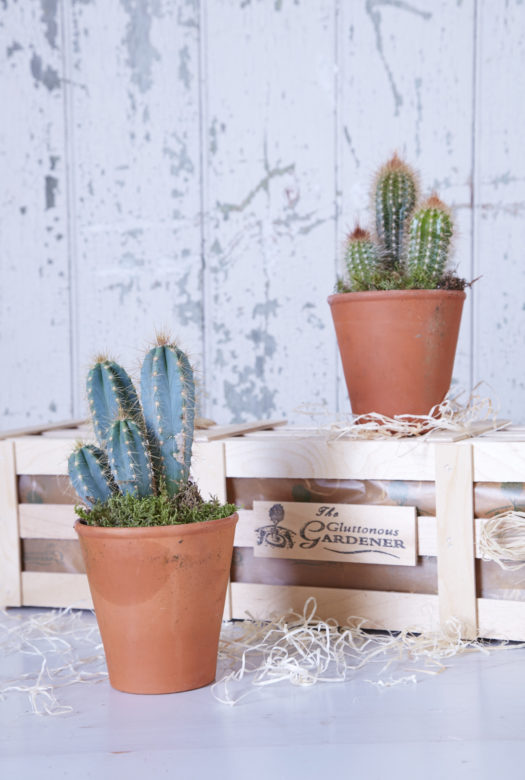 Cactus Collection House Plant Gift