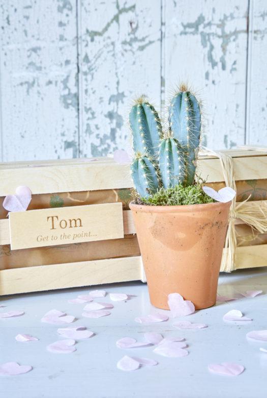 Cactus Garden Gift 01