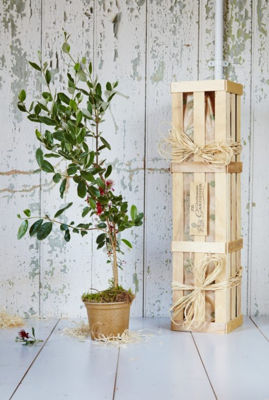 Feijoa Tree Gardening Gift