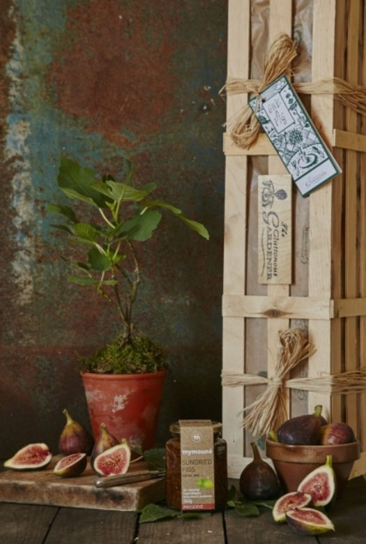 Give a Fig Gardening Gift