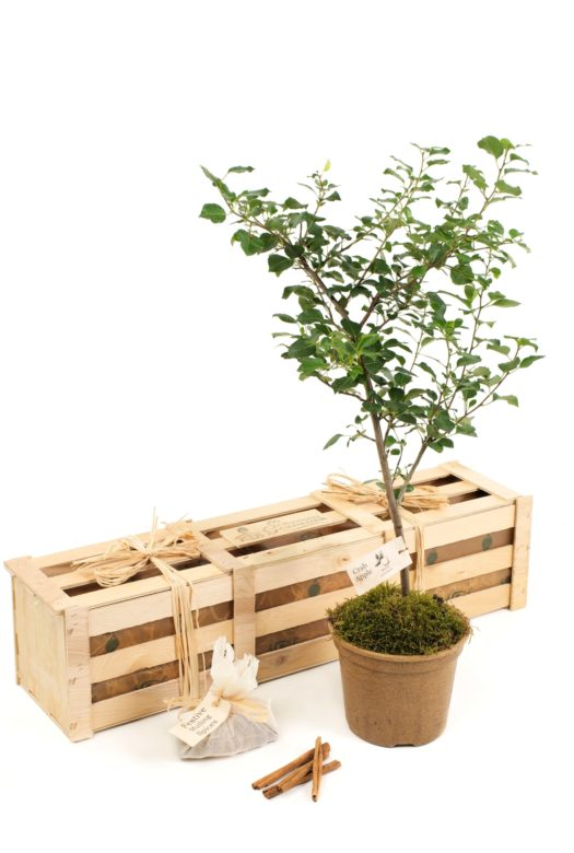 Grow Your Own Cider Gift Crate