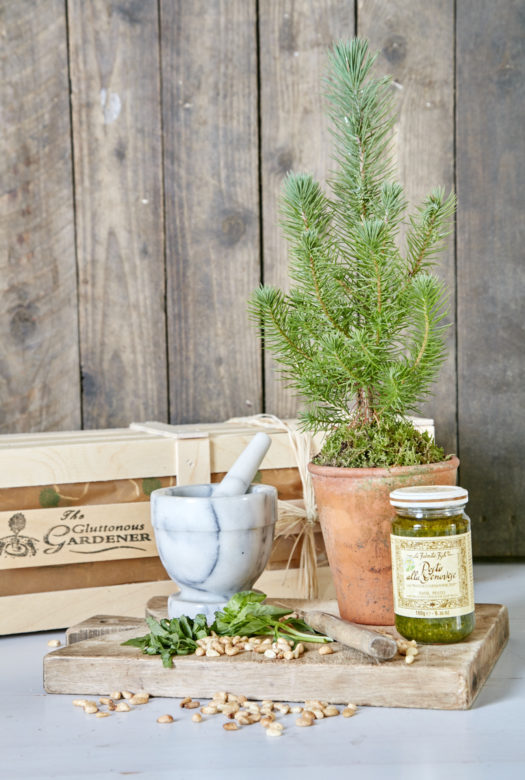 Grow Your Own Pesto Gift Set