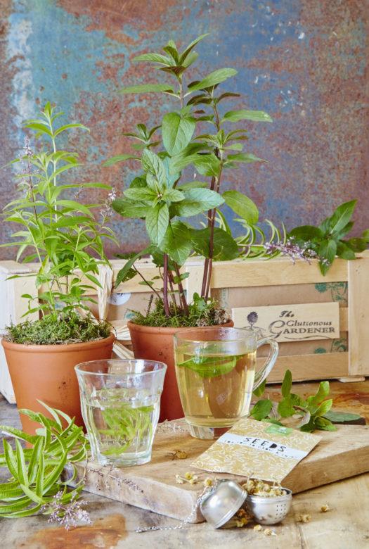 Herb Tea Gift