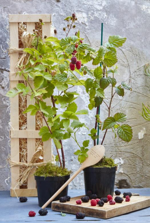 Jam Garden Gardening Gift Set