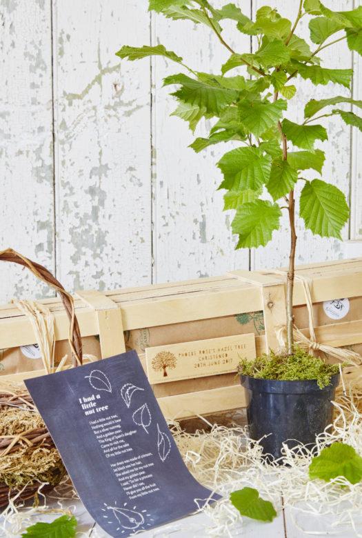 Little Hazel Nut Tree Christening Gift