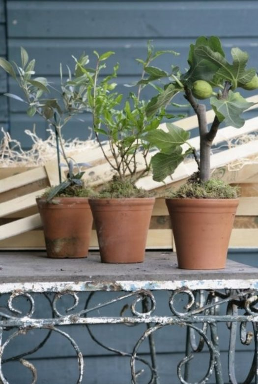 Mediterranean Courtyard Gift