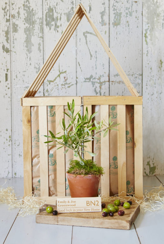 New Home Olive Tree Gift
