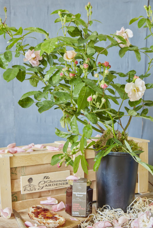 Rose Box Gift