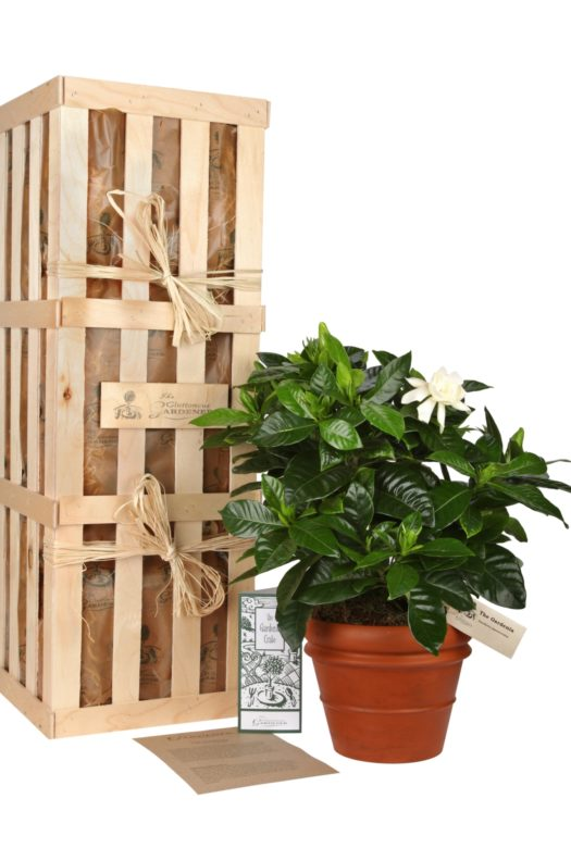 The Gardenia Gift Crate