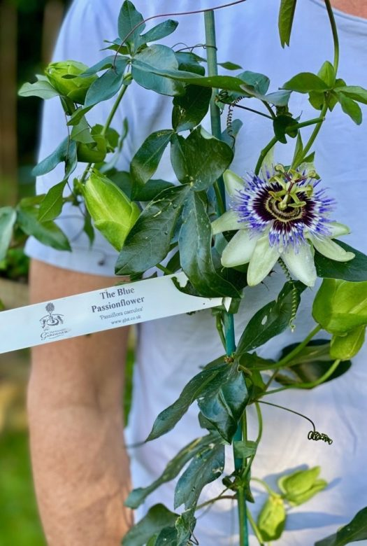 The Passion Flower Crate Closeup 1