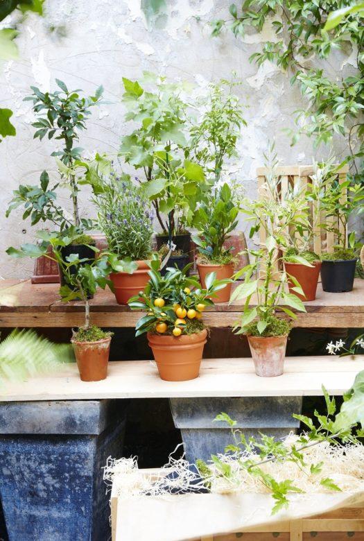 Year Of Gluttonous Gardener Gardening Gifts