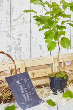 I Had A Little Nut Tree Christening Crate