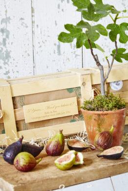 5Th Wedding Anniversary Personalised Fig Tree Gift