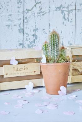 Cactus Garden Gift 02