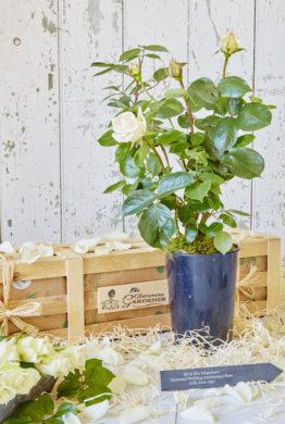 Diamond Wedding Anniversary Rose Gift