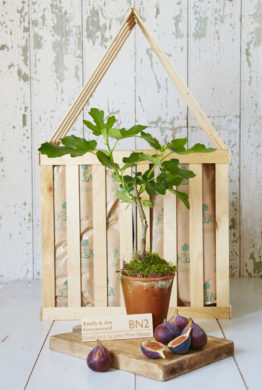 New Home Fig Tree Gift