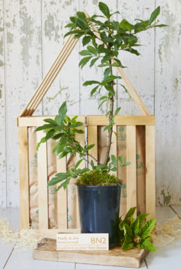 New Home Medlar Tree Gift