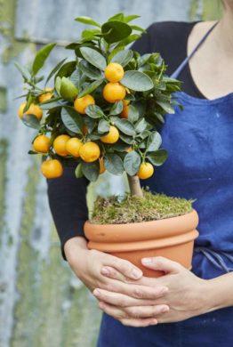 Orange Crate Gardening Gift