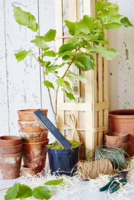 Personalised Godfather Hazel Tree Gardening Gift