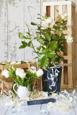 Silver Wedding Anniversary Rose Gift