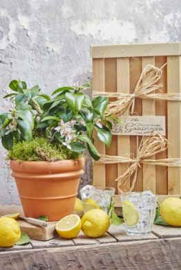 The Lemon Gift Crate