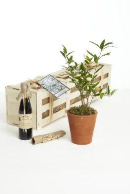 The Pomegranate Gift Box
