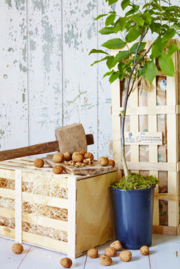 The Walnut Tree Gift Crate